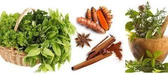 گیاهان مفید در بهبود دیابت را بشناسید