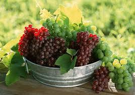 مصرف انگور و کاهش خطر ابتلا به بیماریهای قلبی و دیابت