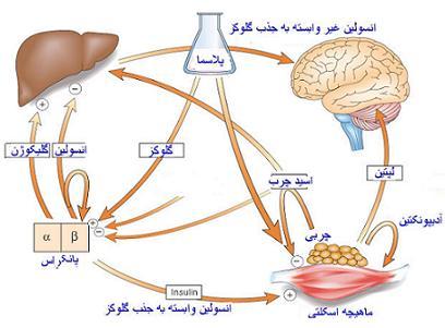 تعریف دیابت به زبان ساده