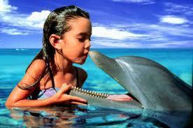 دلفین ها هم به دیابتی میشوند