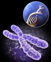 پیوند سلول های بنیادی او تولید انسولین در بدن
