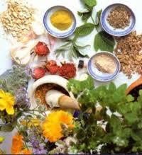 گیاهان موثر در زمان دیابت