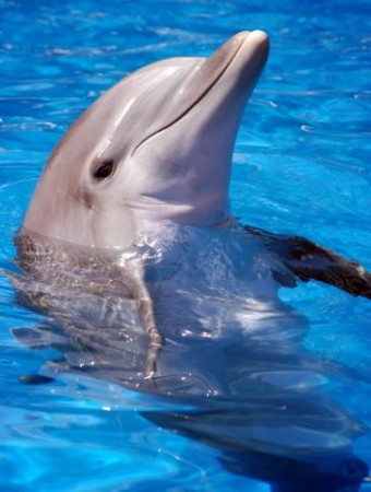 دلفین ها و کمک به درمان دیابت